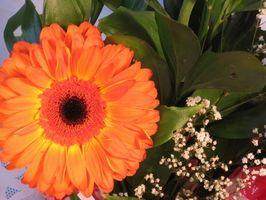 Gewusst wie: senden Sie Blumen nach Jamaika